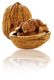 image of a Walnut